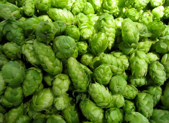 The Session: Hop Selection and Quality