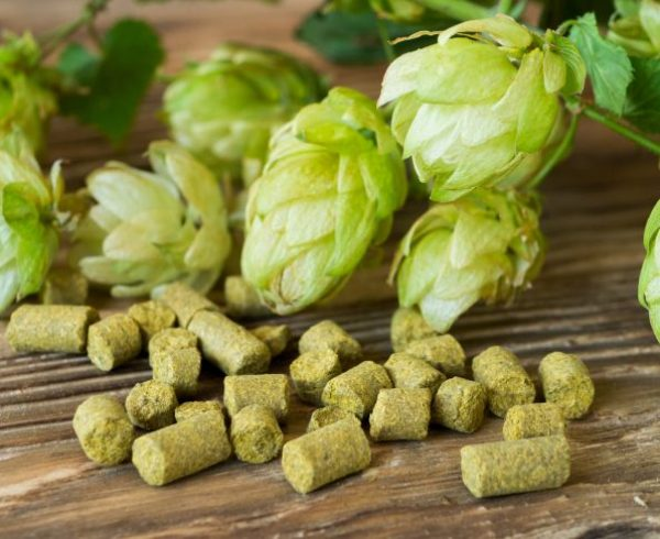 Pelleted and fresh hop on wooden rustic table. Perfect for beer craft