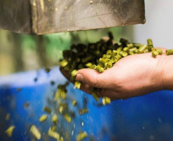 Pellet hops used in hop blends falling through hands